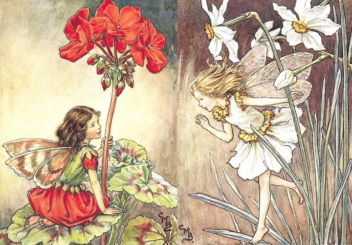 Illustration for the Geranium Fairy from Flower Fairies of the Garden. A girl fairy kneels facing right on a geranium leaf, holding on to the flower stem with her left hand. 300.8.9 FF52wc Garden 9 1944