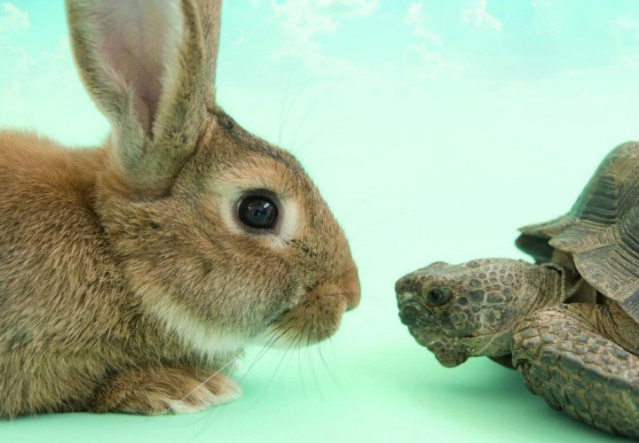 tortoise-and-the-hare-harlow-playhouse-720x500
