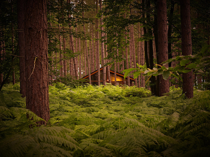 forest-holidays-house-deep-in-forest