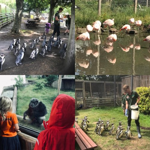 A collage of Penguins, flamingos and a monkey in a Wildlife Park